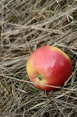 Apple in the grass — Stock Photo