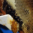 Honeycombs and beeswax — Stockfoto