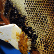 Foto de Stock  : Honeycombs and beeswax