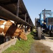The tractor is dispersed grass cows — Stock Photo