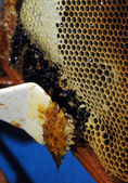 Honeycombs and beeswax — Stock Photo
