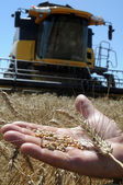 An agriculturist holds the ear of wheat on a palm — Stock Photo