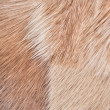 Stock Photo: Fur background