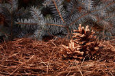 Christmas pine cones — Photo