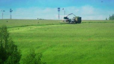 Mietitrebbia e trattori in campo. raccolta erba verde. hd 1080. — Video Stock