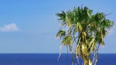 Palmtree and sea. HD 1080. — Stock Video