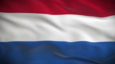 Flag of Netherlands — Stock Video
