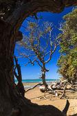 长湾海滩新西兰 — 图库照片