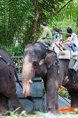 Elephant Rides — Foto de Stock