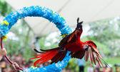 Jurong bird pokaż — Zdjęcie stockowe