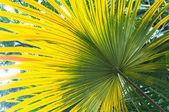 Tropical Plants — Stock Photo