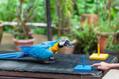 KL Bird Park — Stock Photo