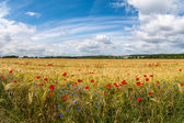 Field in Germany at Summer — Stock Photo