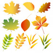 Collection of autumn leaves — Stock Vector