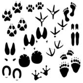 Traces of man, animals and birds — Stock Vector