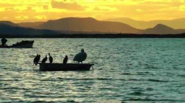 Boat and the Birds in the Sunset — Video Stock