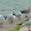 Stock Video: Birds Seagulls