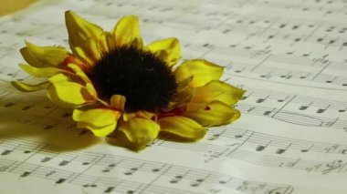 Music notes Sunflower and blood — Stock Video