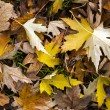 Leaves — Stock Photo #40434451