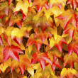 Leaves — Stock Photo #40434609