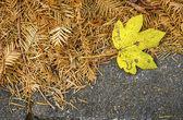 Leaves — Stok fotoğraf