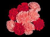 Carnation flowers isolated on black background  — Stock Photo