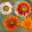 Orange, yellow and white dahlia flowers on colorful background — Stock Photo #48923503