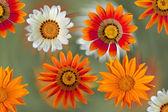 カラフルな背景のオレンジ、黄色および白いダリア花 — ストック写真