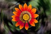 Orange dahlia flower in the garden — Stock Photo