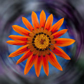 Orange dahlia flower on a colorful background — Stock Photo
