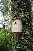 House for birds — Stock Photo