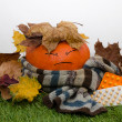 Pumpkin wrapped in a scarf and drugs — Stock Photo #34633085