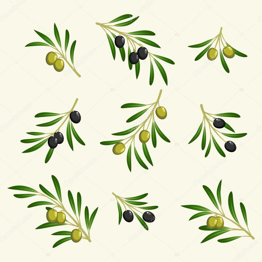 collection de vector de la branche d 39 olivier image vectorielle 43902999. Black Bedroom Furniture Sets. Home Design Ideas