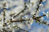 Brzy na jaře — Stock fotografie