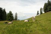 Alpi austriache — Foto Stock