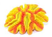 Kunstmatige koraal — Stockfoto