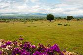 травянистое поле в марокко — Стоковое фото