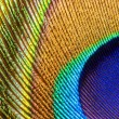 Peacock feather closeup — Stock Photo #29654933