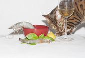 Naughty cat stealing shrimp — Stock Photo