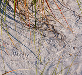 Sea oats scrawling in sand — Stock Photo