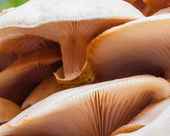 Cluster of wild mushrooms close up — Stock Photo