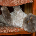 Cat 1 — Stock Photo #30493819