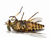 Dead insects 1 — Stock Photo