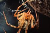 Araignée 2 — Photo