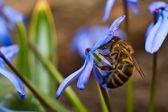 Macro-flower — Stock Photo