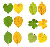 Autumn leaves green and yellow — Stock Vector