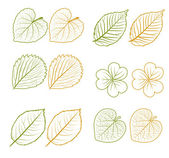 Hand drawn leaves set — Stock Vector