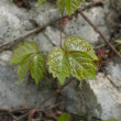Stock Photo: The stone small leaves