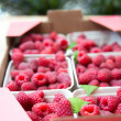 Cartons with Delicious Organic Fresh Raspberries from Local Farm — Stock Photo #28988957