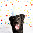 Black Dog Wearing Striped Party Hat — Stock Photo #29041989